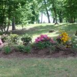 Rhododendrons en mai