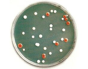 La variabilité de l'ADN (Chapitre 2)