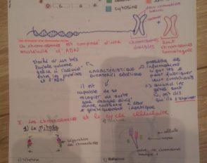 Le matériel génétique (Chapitre1)