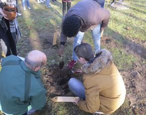 Plantations de 16 arbres pour le climat #GoCOP21