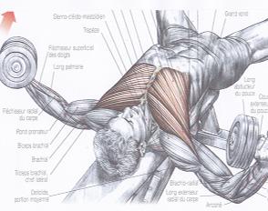 EPS : livret d'entraînement en musculation