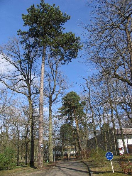 Un pin à proximité du gymnase OB
