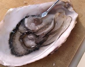 Instants volés de la vie stressée d'une huître