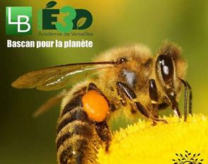 Un rucher à Bascan