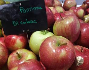 La pomme : vrai fruit ou faux fruit ?